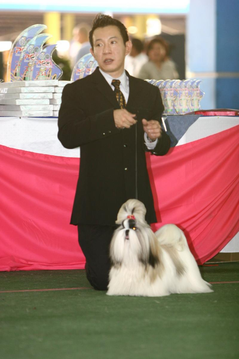 """Melissa"" - BIS, BBPIS, Hall Of Fame, Gr. Ch. Hearty Artemis Super Winning Contr"