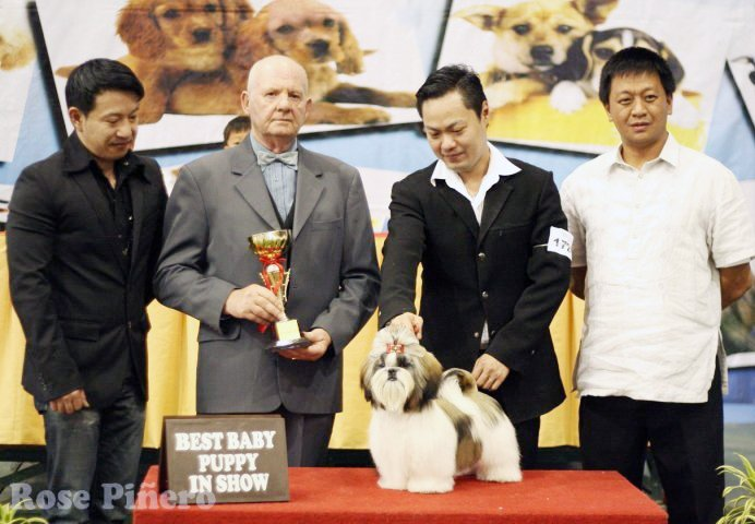 """Junior"" - BBPIS Group Winner Ch. Artemis Supreme Super Power"